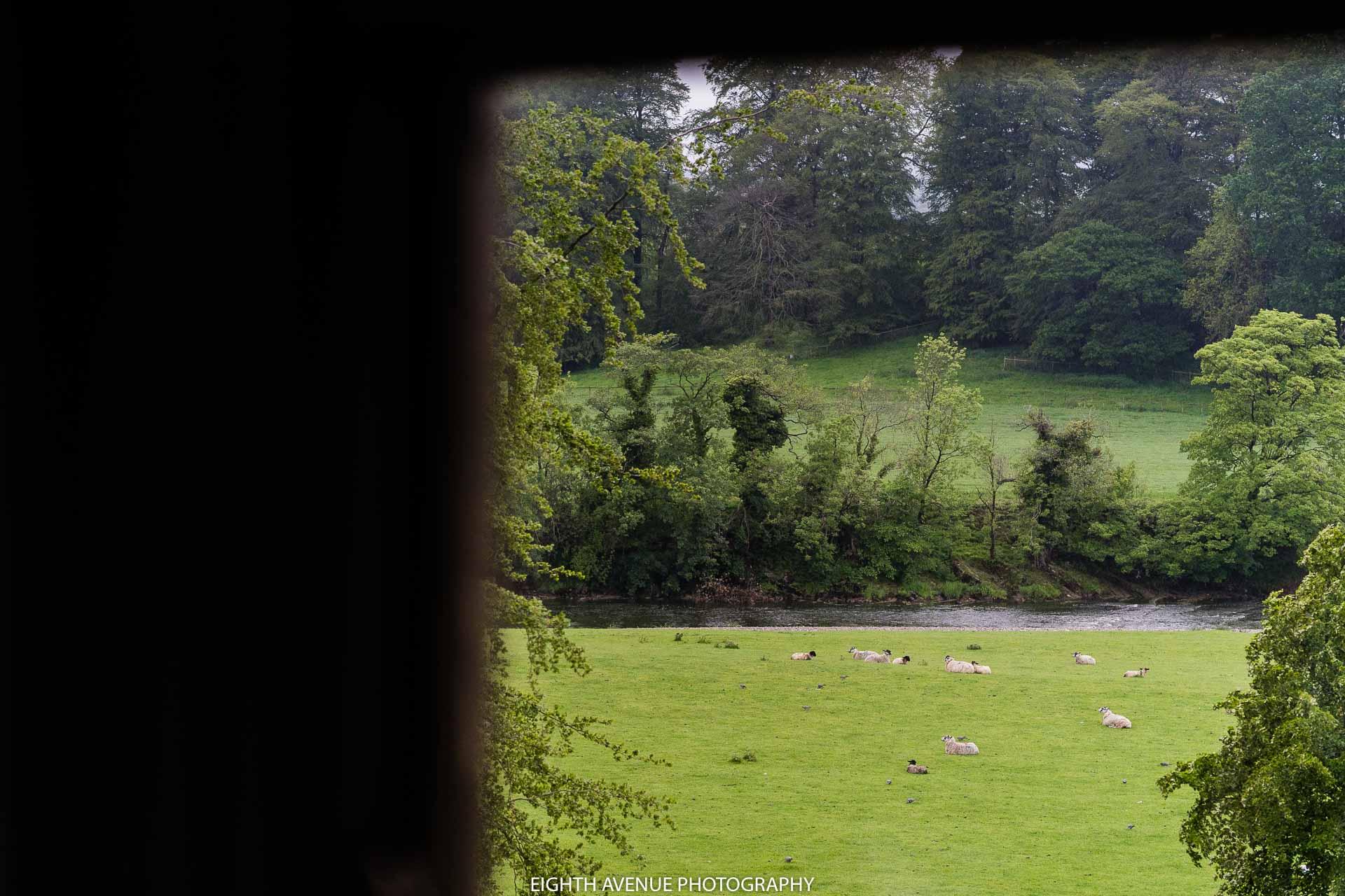 View form Mitton Hall sheep